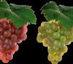 виноград - сердце