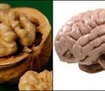 орех - мозг